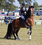 STOCK - Gold Coast Show 337 by fillyrox
