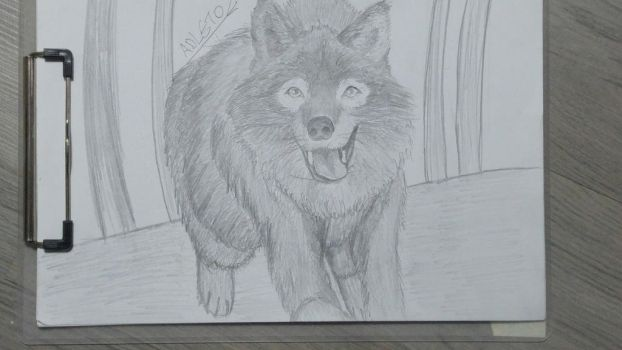 First attemp to draw wolf by mrepicdzn