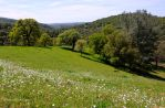 Spring in the Foothills by kayaksailor