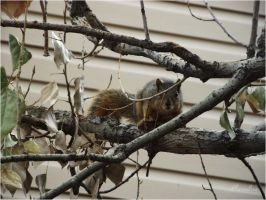 squirrel-serial-1 I'm waiting from morning by sonafoitova