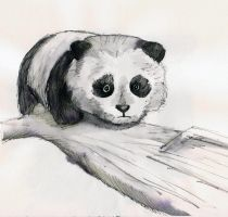 Panda sketch by destiny-love-art