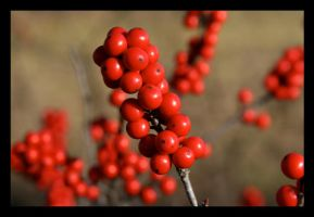 Little Red Balls by sking243