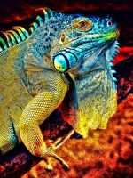 The Colored Iguana by RiegersArtistry