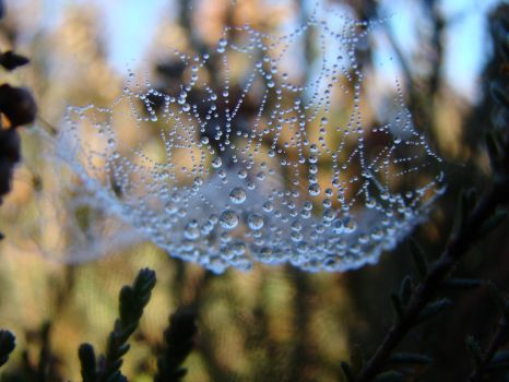 drops on a spiderweb by Thorvarius