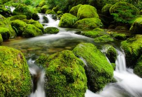 Oregon Green Heaven by Mjag