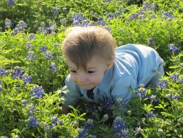 Baby in Bluebonnets Stock by Skysofdreams-Stock