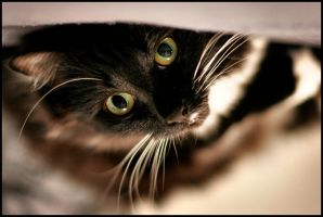yet another cat photo by claytes