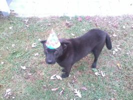 Birthday Dog by Proud2BMe1936
