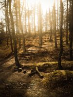 Forest Trail by TammyPhotography