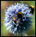 Busy as a bee twiddly dee by LordLJCornellPhotos