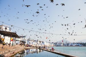 Birds at the Ghat by drifterManifesto