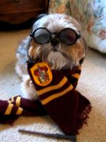 'Hairy' Potter by MissCosettePontmercy