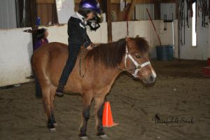 Red Bay Pony Stock Tacked by Thunderbolt-Designs