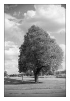 2014-295 Tree in the sun by pearwood