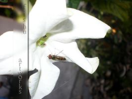 Zoom on insect by Sadelikfish