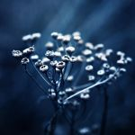 A Study in Blue II by Peterix