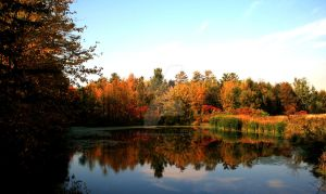 Fall Colors in Orillia by ryanhacking