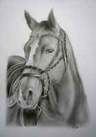 horse drawing by chris108