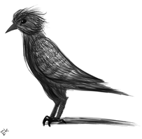 Bird of Black and White by Enderkitty01