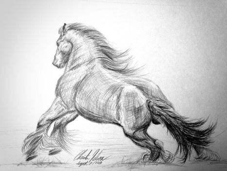 Horse Practice by Christa-S-Nelson