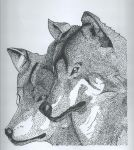 Pair of Wolves by bookwormartist