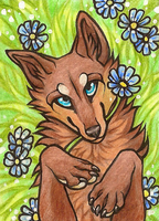 ACEO Blue-eyewolf by CanisAlbus