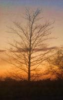 winter tree at sunset by loobyloukitty