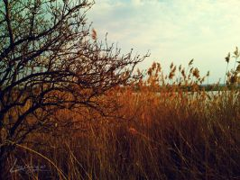 The pond by Lusiozo