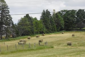 Circular Hay Bales Resting On Green, P E I 3 by Miss-Tbones