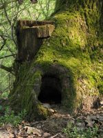 Hobbit's Home by KungfuHamster