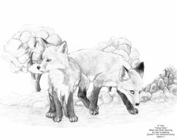 Young Foxes by AlexKH97