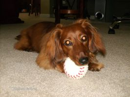 My Ball! by willow1894