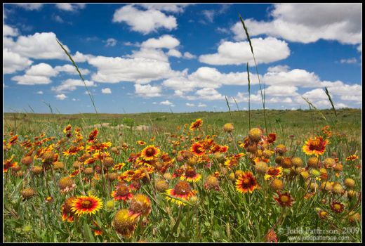 Among the Wildflowers by juddpatterson