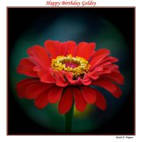 Happy Birthday Goldey by David-A-Wagner