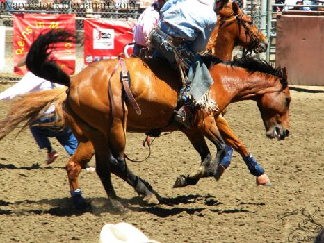 Rowell Ranch Rodeo - 13 by Nyaorestock