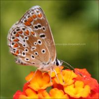 Butterfly 2 by pourquoipas