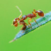 fighting ants by indojo