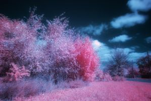 Infrared 22 by kelmeloo