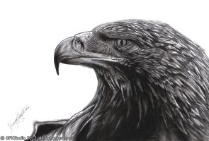 eagle head by KondaArt