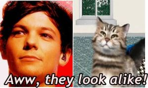 Louis Tomlinson and FooPets cat LOL by brindlecatt