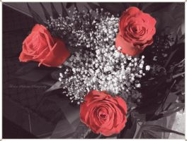 Red roses by moonik9