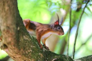 Squirrel on the tree by luka567