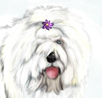 Belle by Lilac-Valley-Kennels