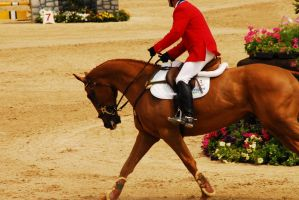 Rolex 08 Show Jumping10 by zeeplease