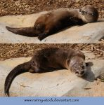 Cute Otter- pack- STOCK by Rainny-Stock