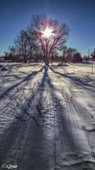 Long Shadows in Winter by Nini1965