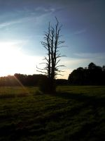 dead tree in the evening by Blastermind