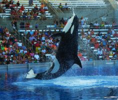 Staring At The Sky by OECDLapushfan101