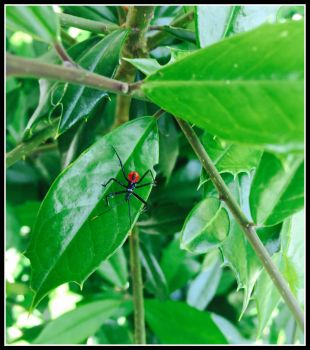 Assassin  Bug by WVUARTIST