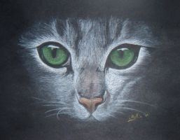 Jade eyed cat by lucx91